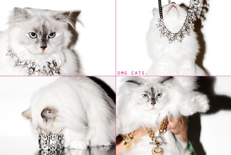 jojotastic-OMG-CATS