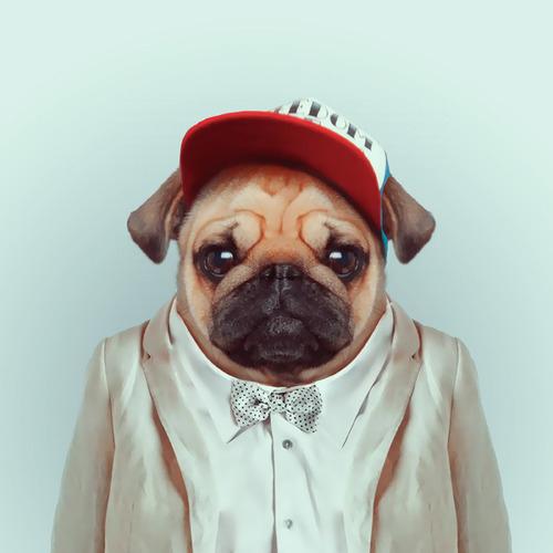 jojotastic-get-serious-zoo-portraits-by-Yago-Partal2