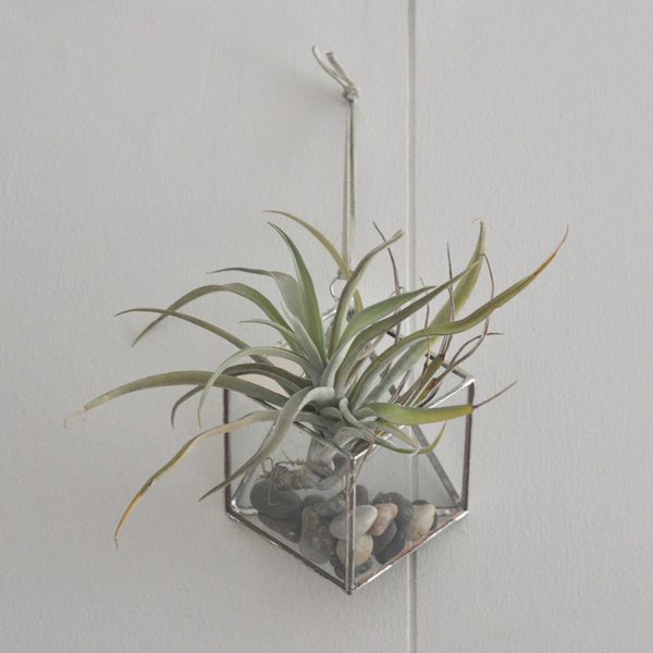 wall terrarium by ABJ Glassworks
