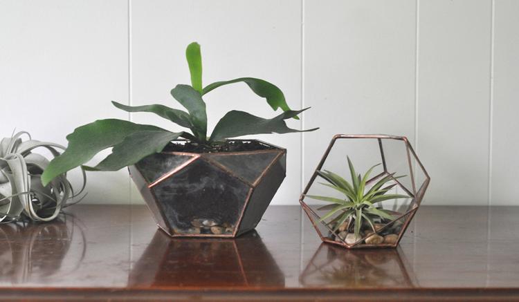 terrariums by ABJ Glassworks