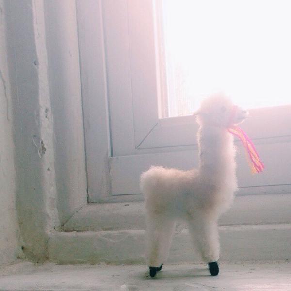 mini llama from firefly