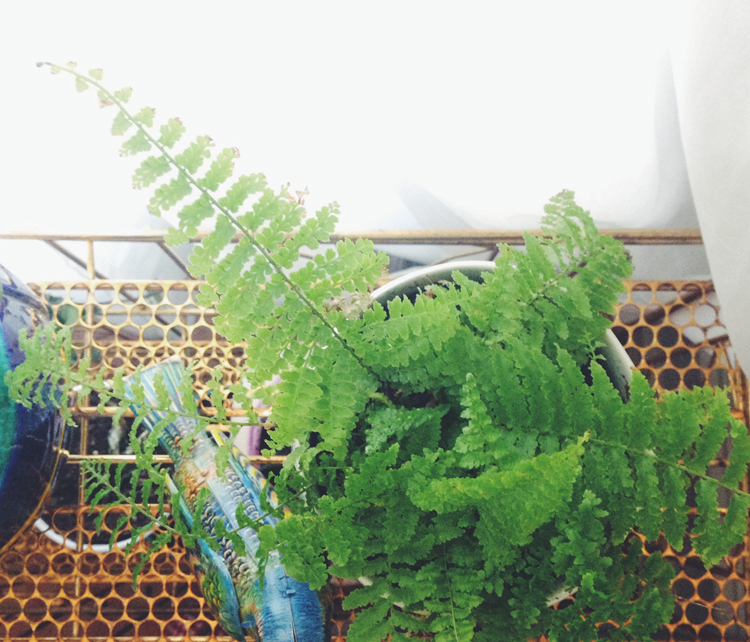 fern friend