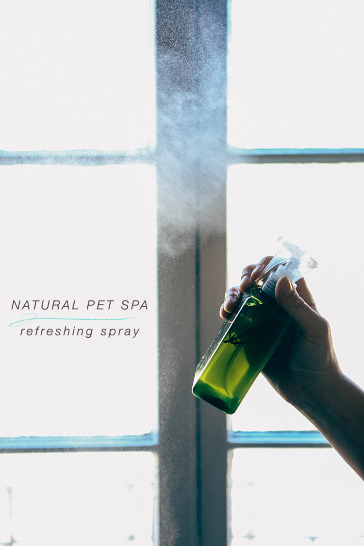 DIY natural pet spa // lavender refreshing spray #BeyondPartners