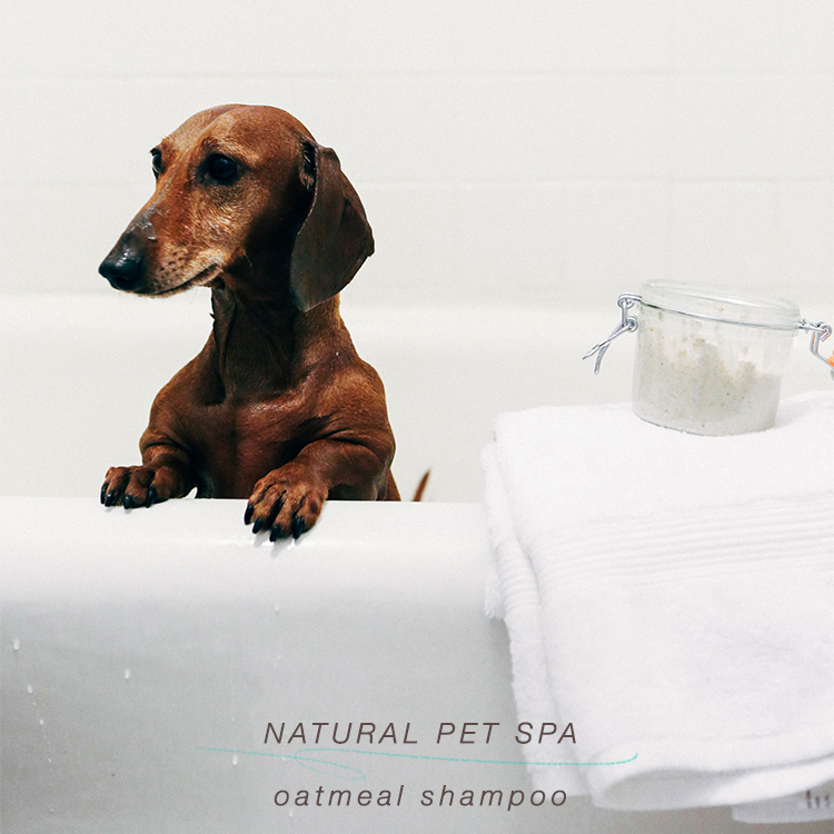 DIY natural pet spa // natural oatmeal dog shampoo #BeyondPartners