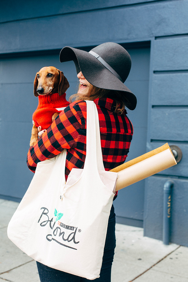 natural pet tips for pets during the holidays #beyondpartners