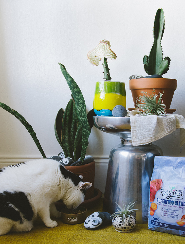 how to shop for pet-friendly houseplants + a DIY to keep your plants safe from cats #beyondpartners