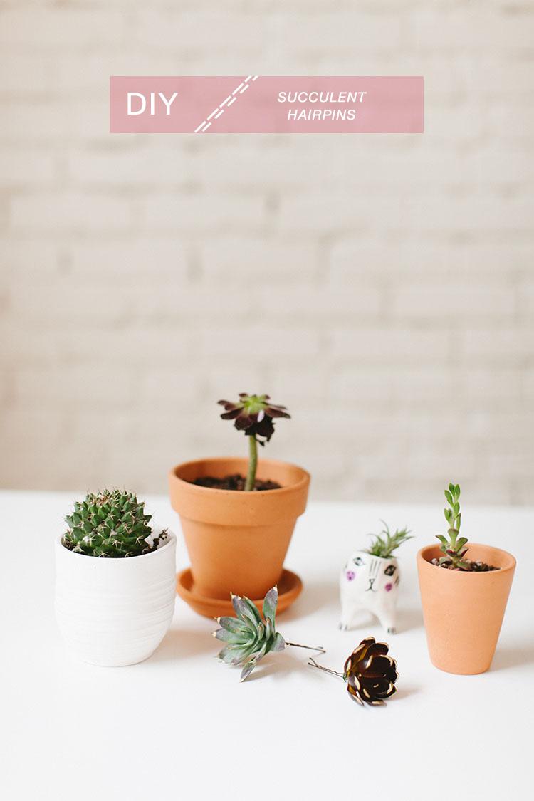 diy // succulent hairpins jojotastic.com