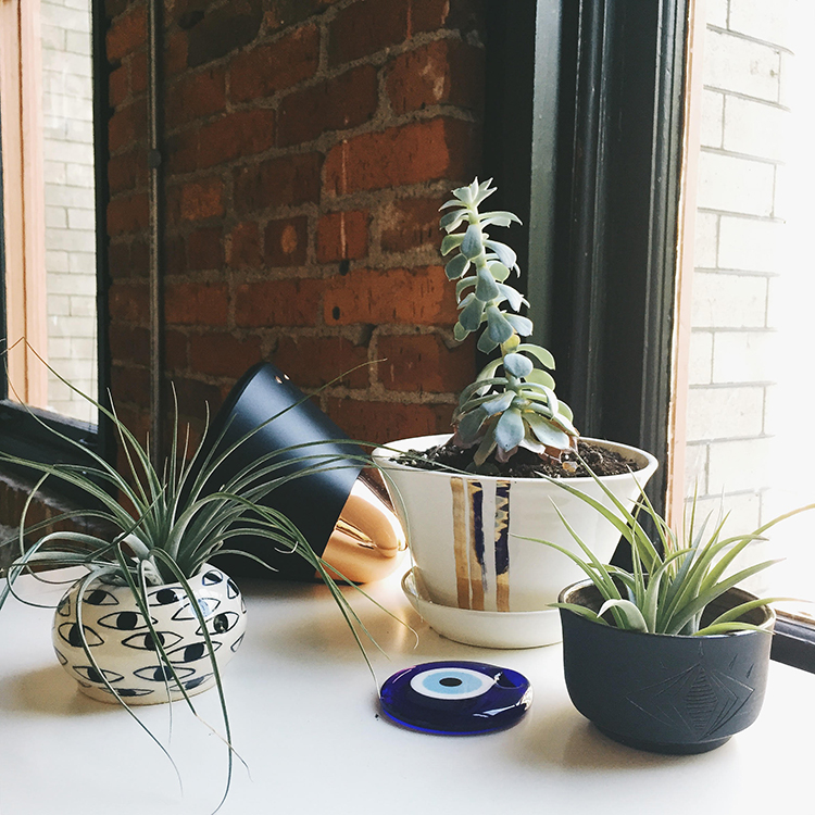 new plant friends in the studio // jojotastic.com @jojotastic
