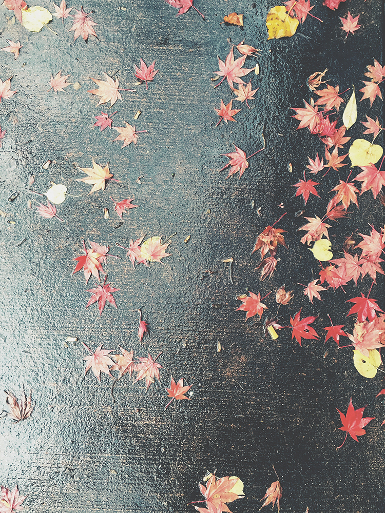 fall in seattle // jojotastic.com