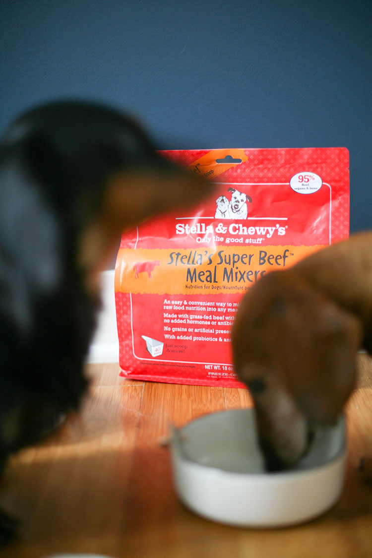 I always make sure my sweet dachshunds are fed with the very best food — raw, organic, and nutritious like @stellaandchewys Meal Mixers. Find out more on Jojotastic.com #MealMixerChallenge #StellaandChewys #ad