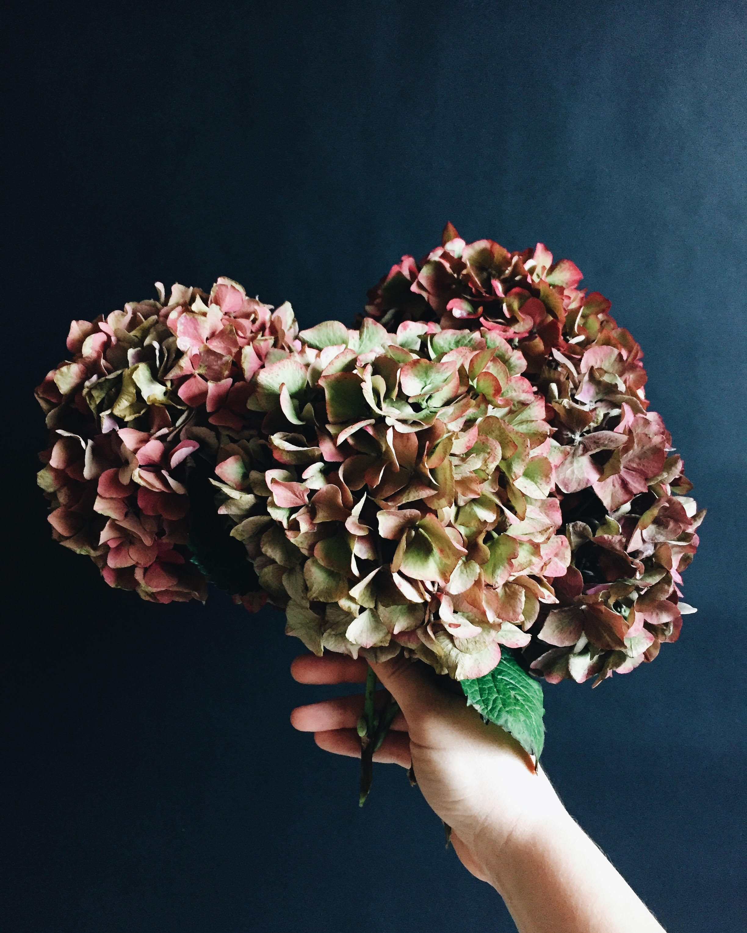 a simple bouquet of hydrangeas in soft, fall, pastel color palette - jojotastic.com