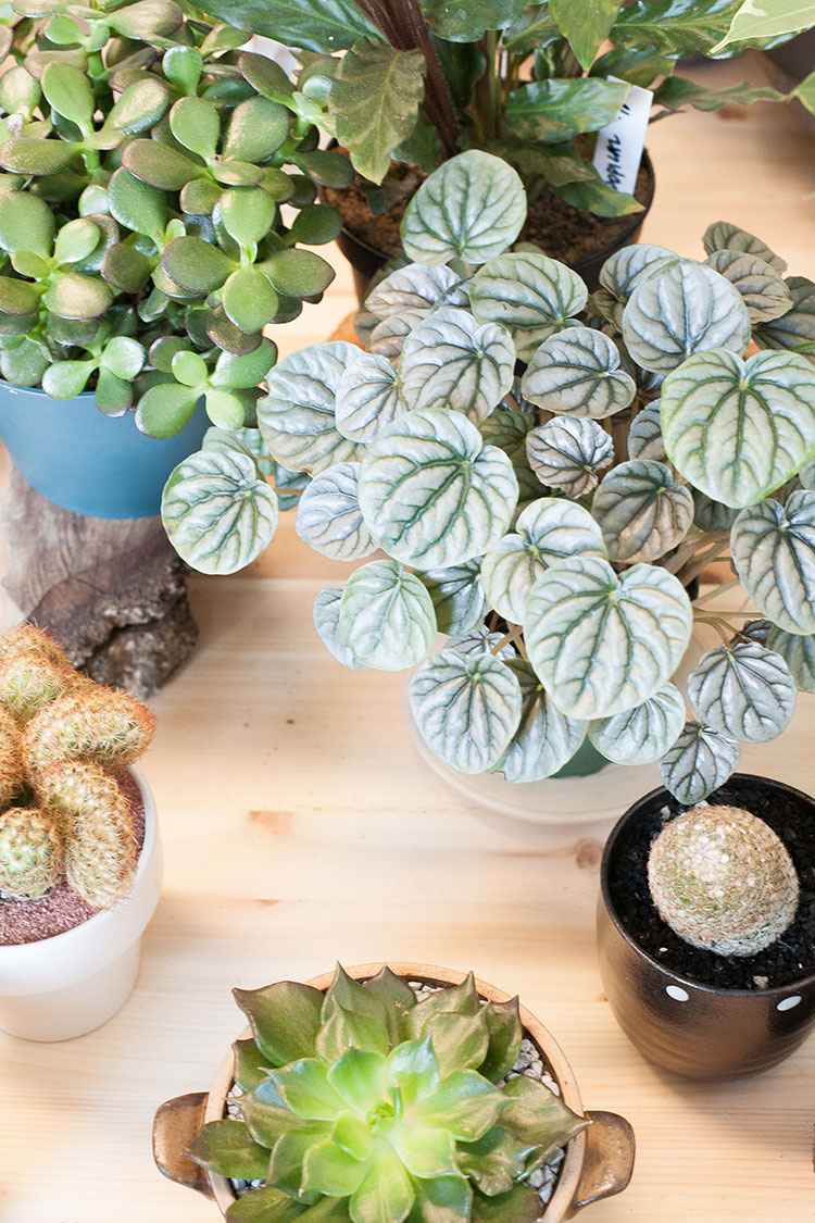Shop and visit Seattle like a local with this city guide. My favorite plant and home decor boutique is Miroja in Ballard — see more of this local shop on Jojotastic.com