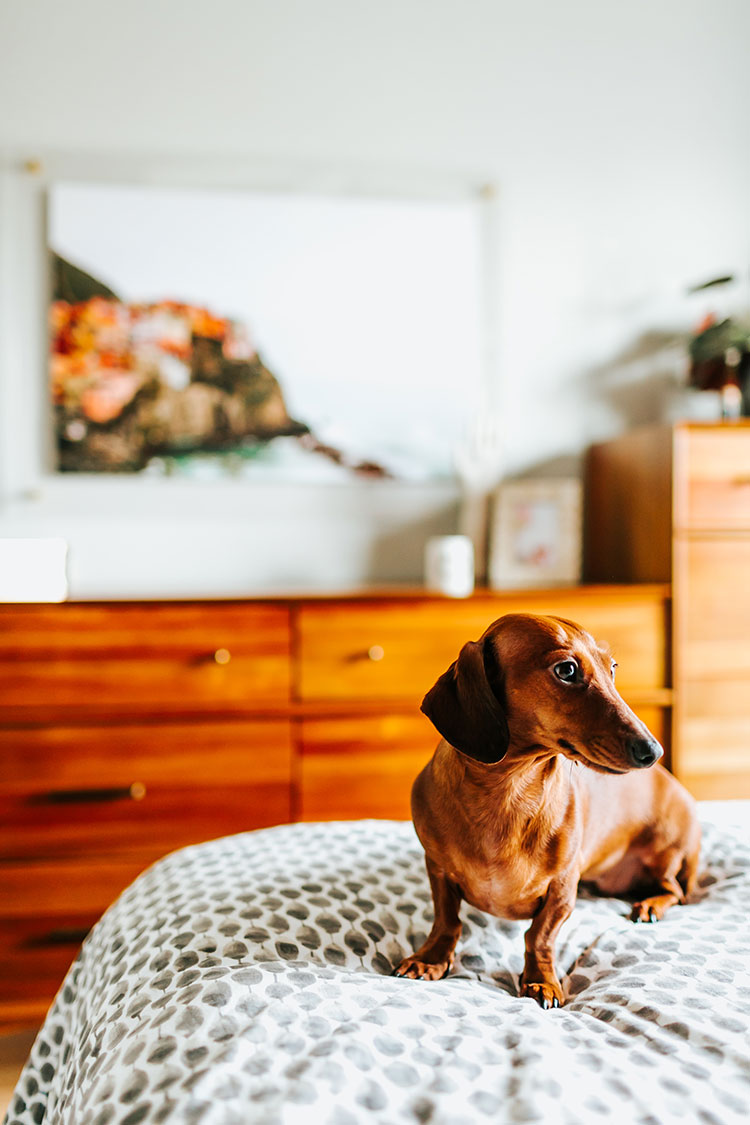 silly dachshund with a boho-minimalist bedroom makeover, featuring the lucite and brass Float Frame from Artifact Uprising! Plus, enter the giveaway to win a frame for your own home! All of the details are on Jojotastic.com @artifactuprsng