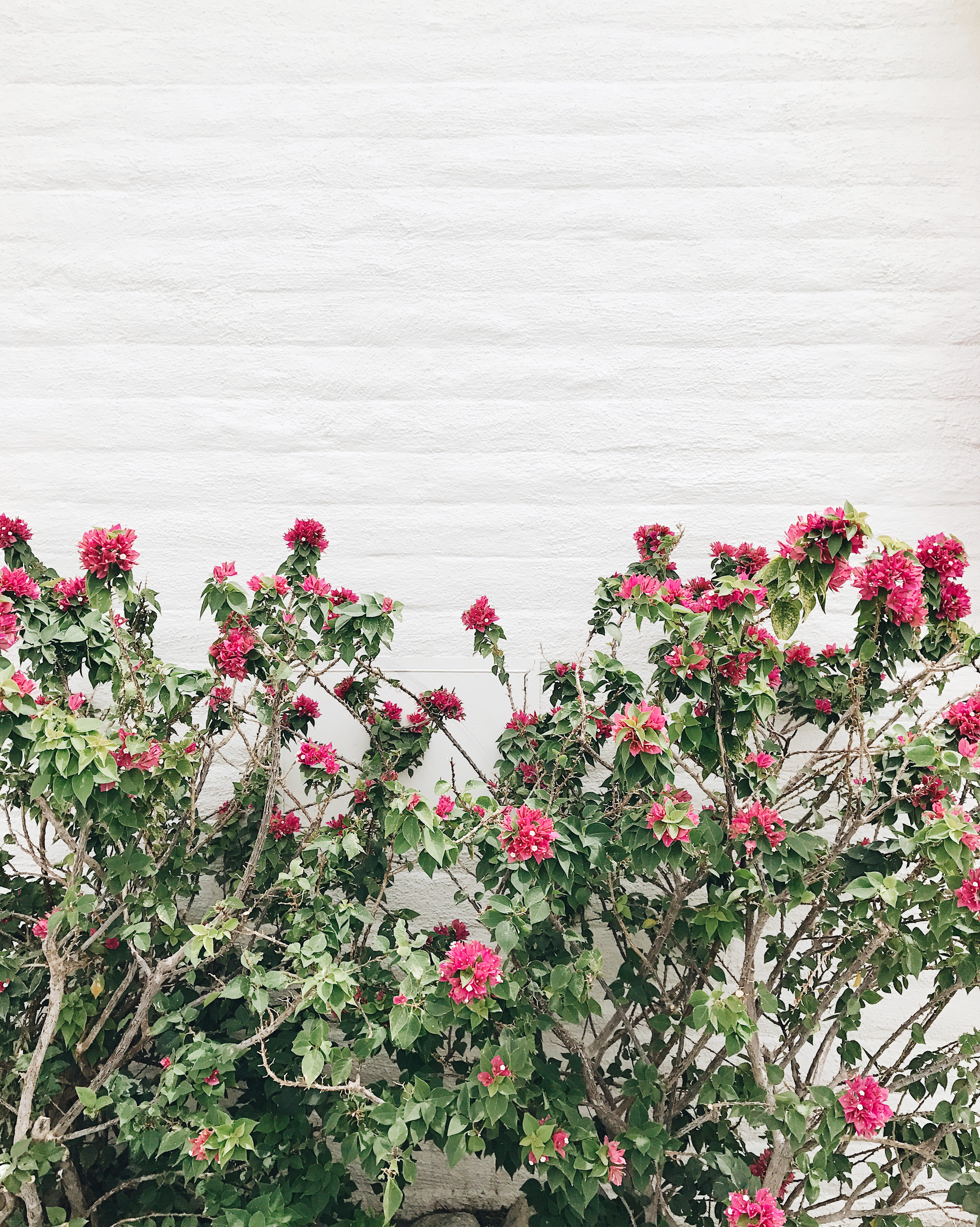 jojotastic travel guide and visual diary for palm springs. bougainvillea
