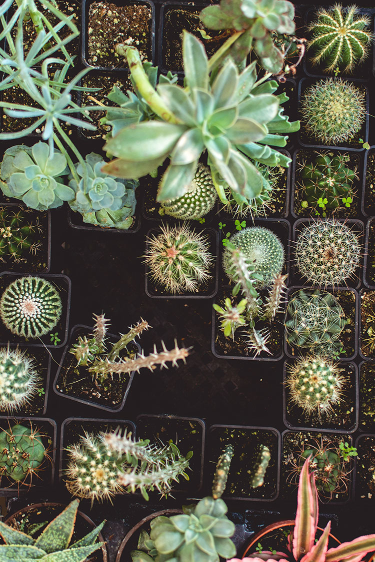 The best houseplants for small spaces, awkward corners, and lowlight homes! #plants #houseplants #lowlightplants #indoorgardening #smallspaces #tipsandtricks #tinyhome #decoratingwithplants