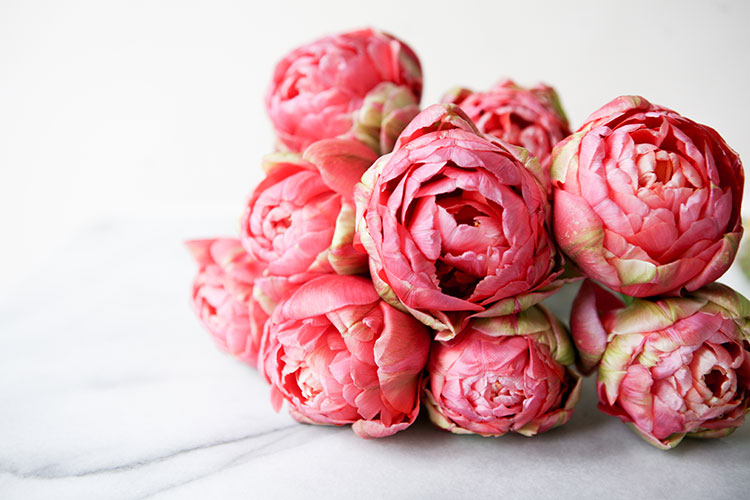 pile of pink peonies. springtime flowers. #peonies #flowers #florals #spring #springflowers
