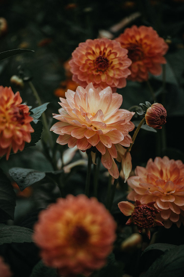 The Weekend Edit of July, 7th: moody dahlias, summer flowers
