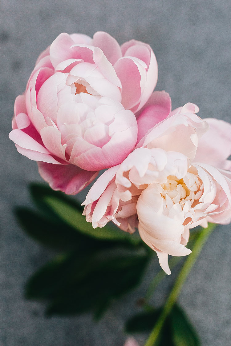 10 Self-Care Ideas To Help You Celebrate Springtime! #selfcare #wellness #springtime #spring #springselfcare #selfcareroutine #selfcaretips