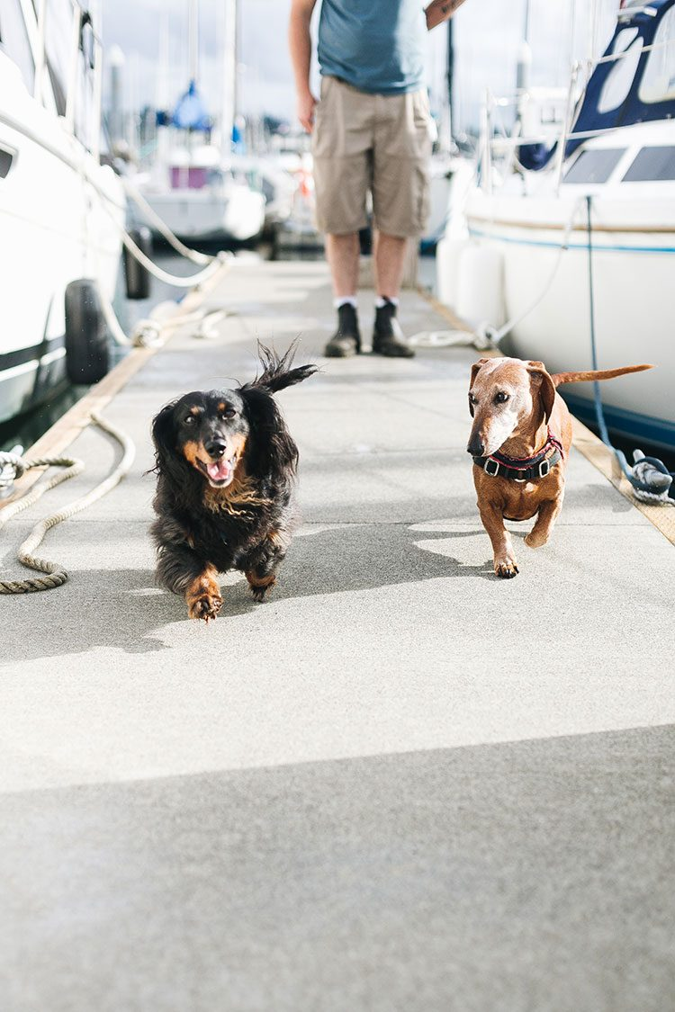 How We Keep Our Aging Pets Active & Healthy! Learn all about Flexadin® Advanced with UC-II® and how this joint supplement helps to keep cats and dogs active and reduces joint stiffness. @myhappypetsUSA #ad #FlexWithFlexadin #dachshunds #wienerdogs #activedogs #agingdogs #cats #activecats #jointsupplements #petsupplements