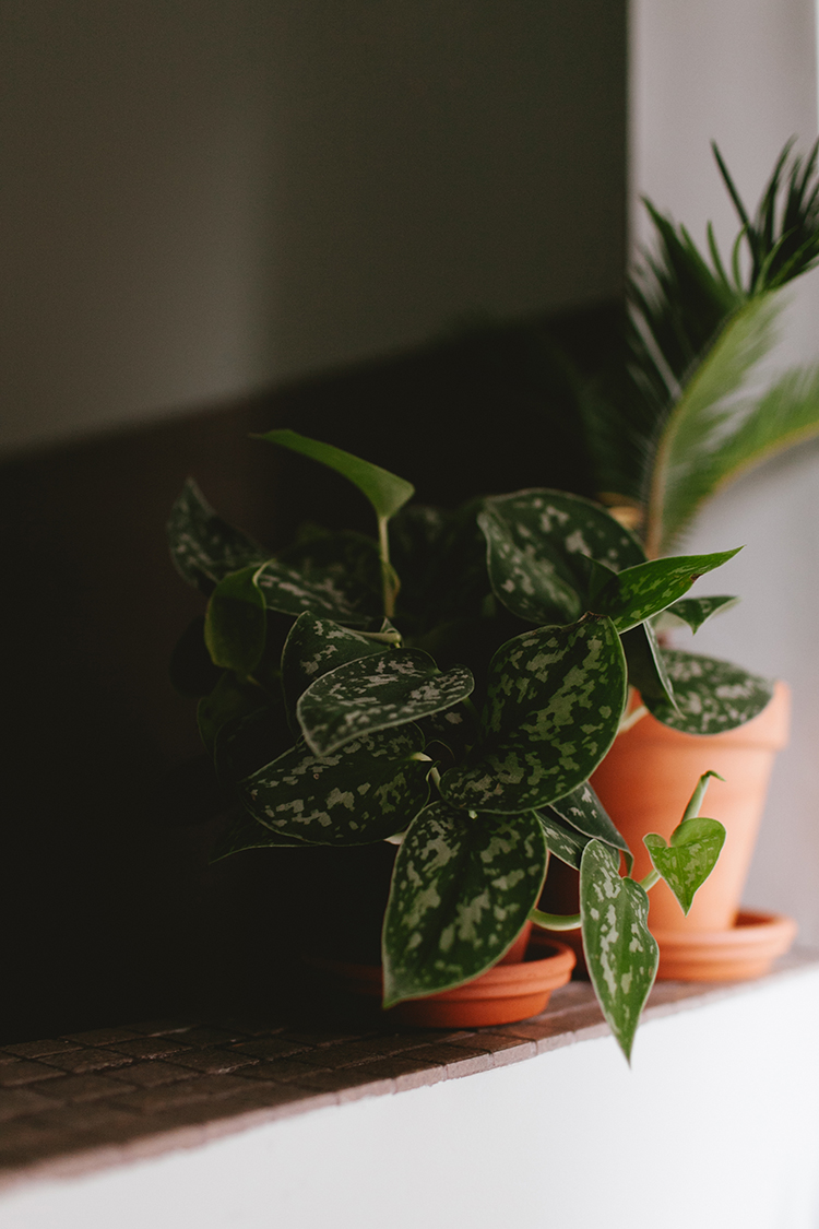 The Easiest Plants to Keep Alive? Try These 7 Hard-to-Kill House Plants! #plants #houseplants #lowlightplants #indoorgardening #tipsandtricks #decoratingwithplants #zzplant #chinesemoneyplant #snakeplant #pothos #aloevera #Pileapeperomioides #prayerplant