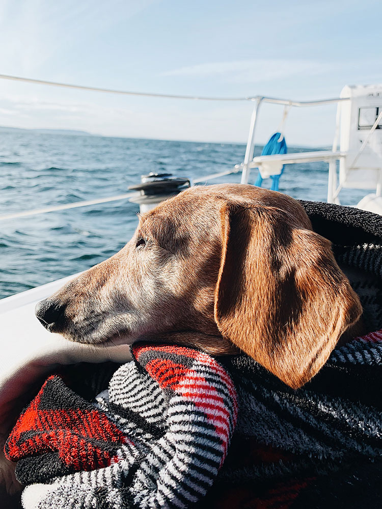The Friday Edit. Check out my list of the top reads, interesting posts, delicious recipes, and MORE from the week. #weekendreading #fridayedit #recap #dachshund #wienerdog #sailing #pnw