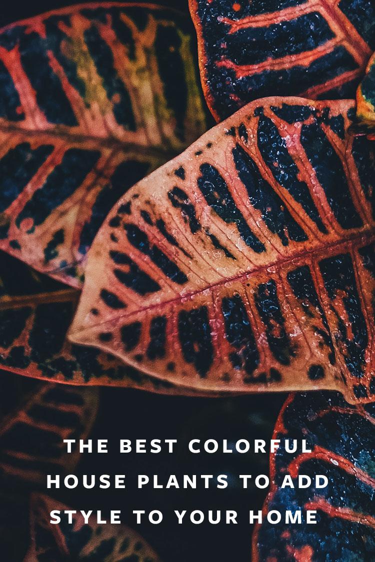 The Best Colorful House Plants to Add Style to Your Home! #plants #houseplants #lowlightplants #indoorgardening #tipsandtricks #decoratingwithplants #nerveplant #wanderingjew #elephantear #croton #calathea #Peperomia