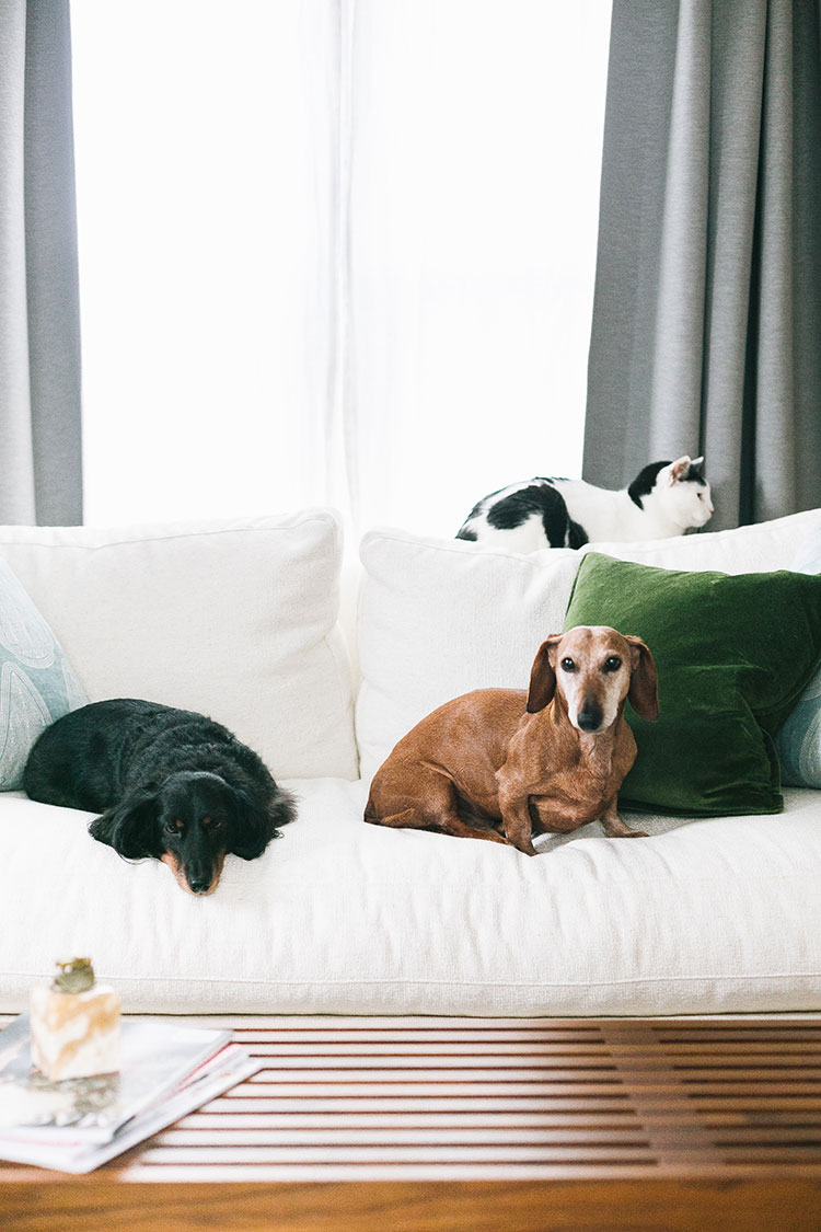 Thinking about adopting a pet and live in a small space? Check out my best tips for having pets in a small space including dogs, cats, and more! Pet tips, small space living inspiration.