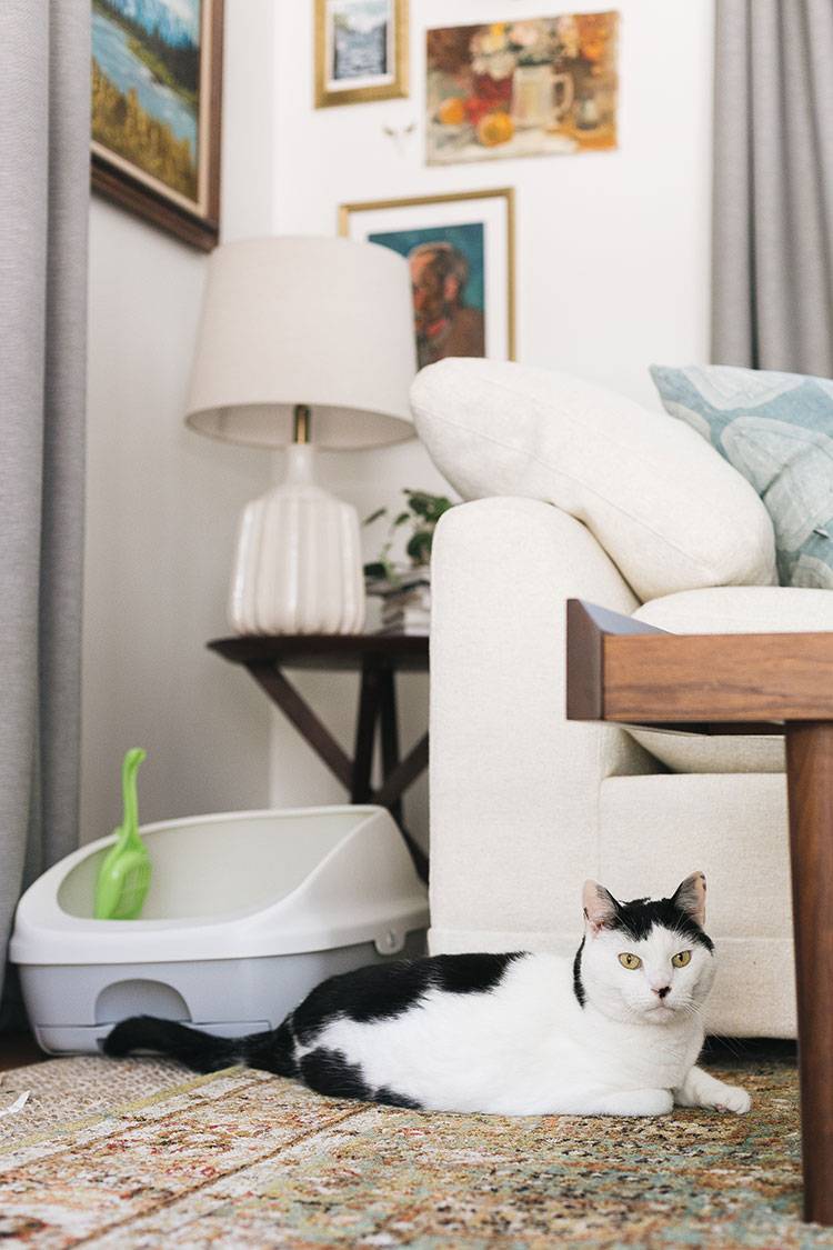 Tidy Cats BREEZE Litter System Review + Tips for Living With a Cat in a Small Space! #AD Find out why I love the ammonia odor absorbing pads and anti-tracking pellets from #TidyCats and how I transitioned my cat to a new litter box on jojotastic.com #EaseofBREEZE