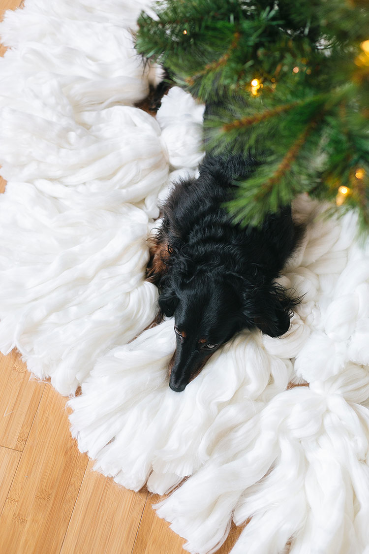 Take Good Holiday Photos of Your Pets Like a Pro with These 6 Tips from a photographer! Holiday card inspiration and photo taking tips.