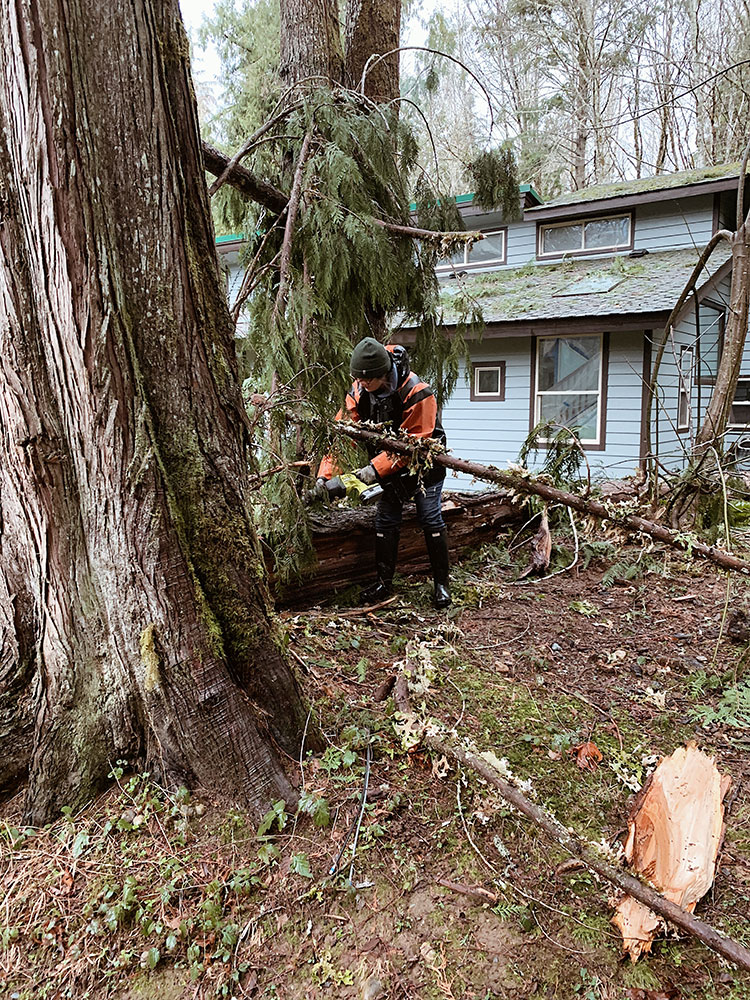 all about the tree falling on our cabin in the North Cascades after a wind storm