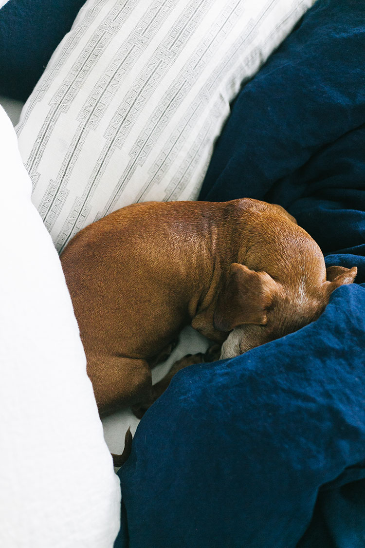 My Practical & Complete Guide to the best Bedding for Pet Owners! how to care for bedding, which bedding to choose for pets, how to prevent snags, the difference between linen, percale, and other pet-friendly fabrics and more!
