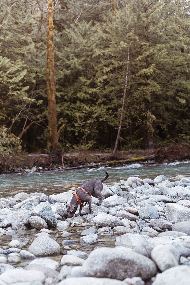 Photo Journal: Bacon Creek in the North Cascades, nature photography of foggy river beds, snowy mountains and winter scenes