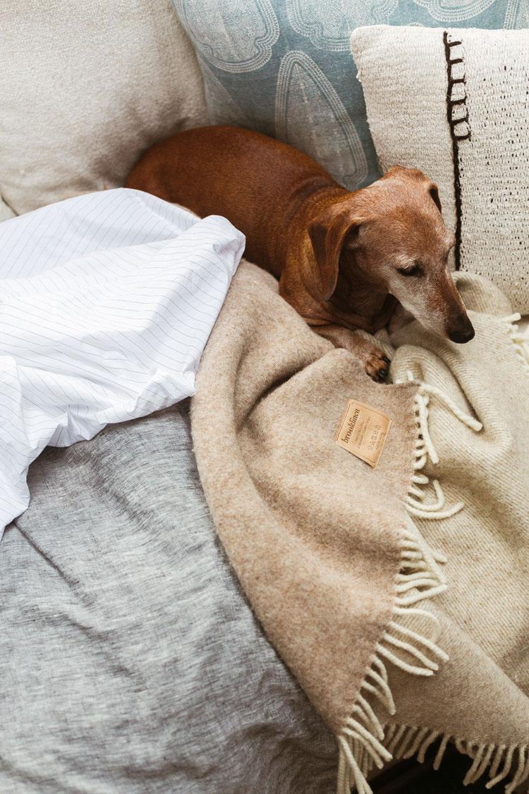 Brooklinen bedding, blanket, and wiener dog