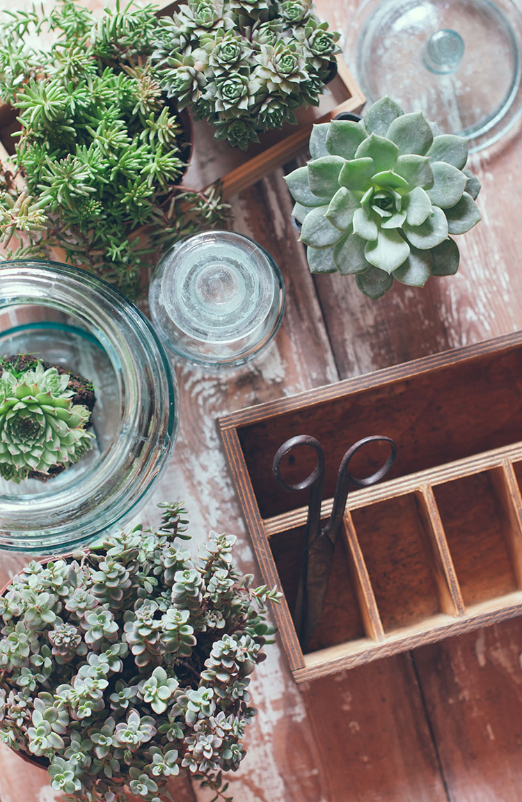 The best houseplants to put in a kitchen including pothos, snake plant, spider plant, venus flytrap and more kitchen house plants to try!