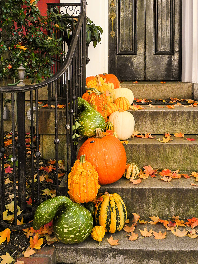 5 Front Porch Decor Ideas to Inspire You For Fall. Halloween decorations for the front porch and patio, Thanksgiving decor inspiration, fantasy pumpkins, white pumpkins, mums and white pumpkins, DIY fall decor