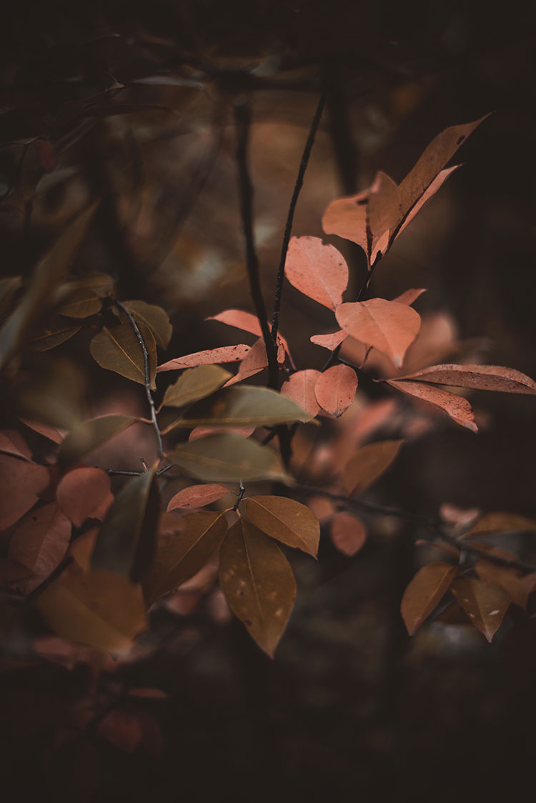 Learn how to forage for fall foliage, flowers, stems, and branches like a pro with these easy tips and tricks. Styling Tips for Your Foraged Fall Decor like centerpieces, a bough and more. How to dry foliage and how to dry flowers